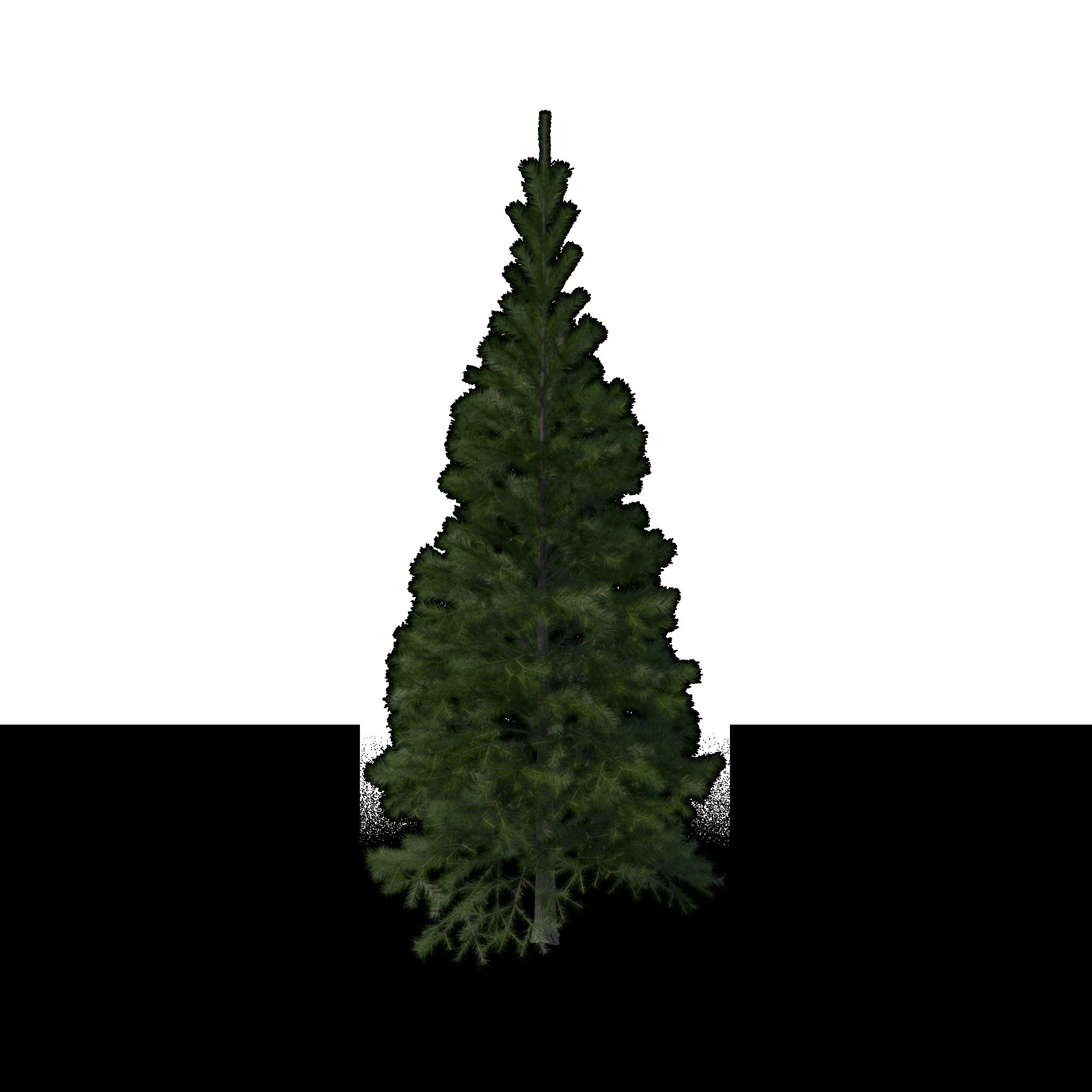 Evergreen-tree-removal-company