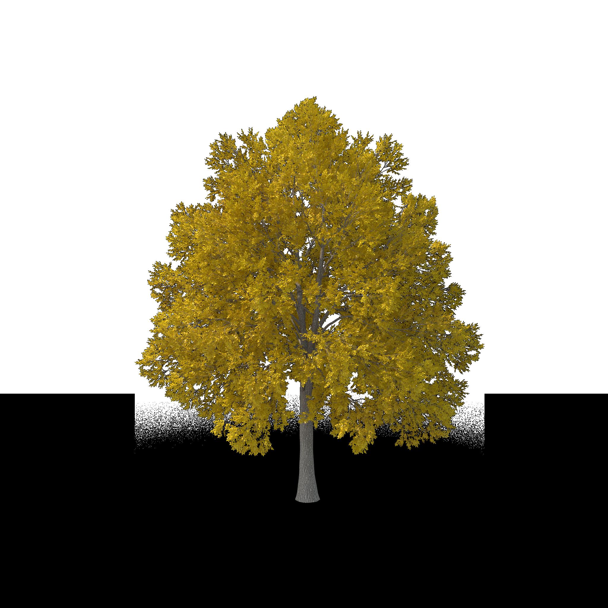 Tree-arborist-near-me